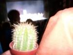 Der Kaktus in der Oper