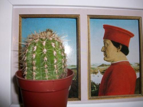 Kaktus im Bild
